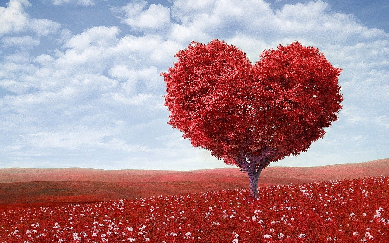 Love - Heart Shaped Tree