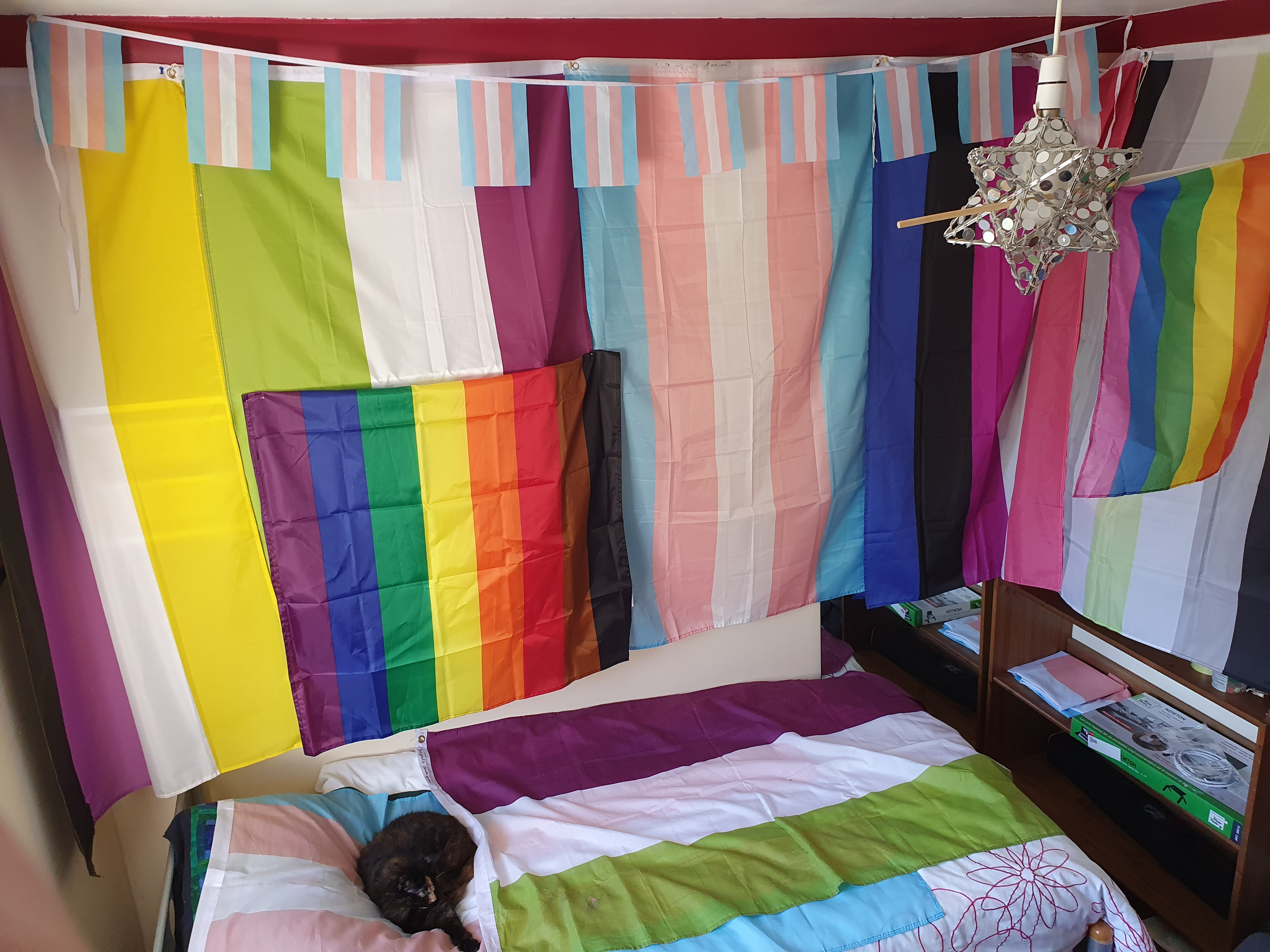 Tran and enby flags hanging on a wall, cat on bed