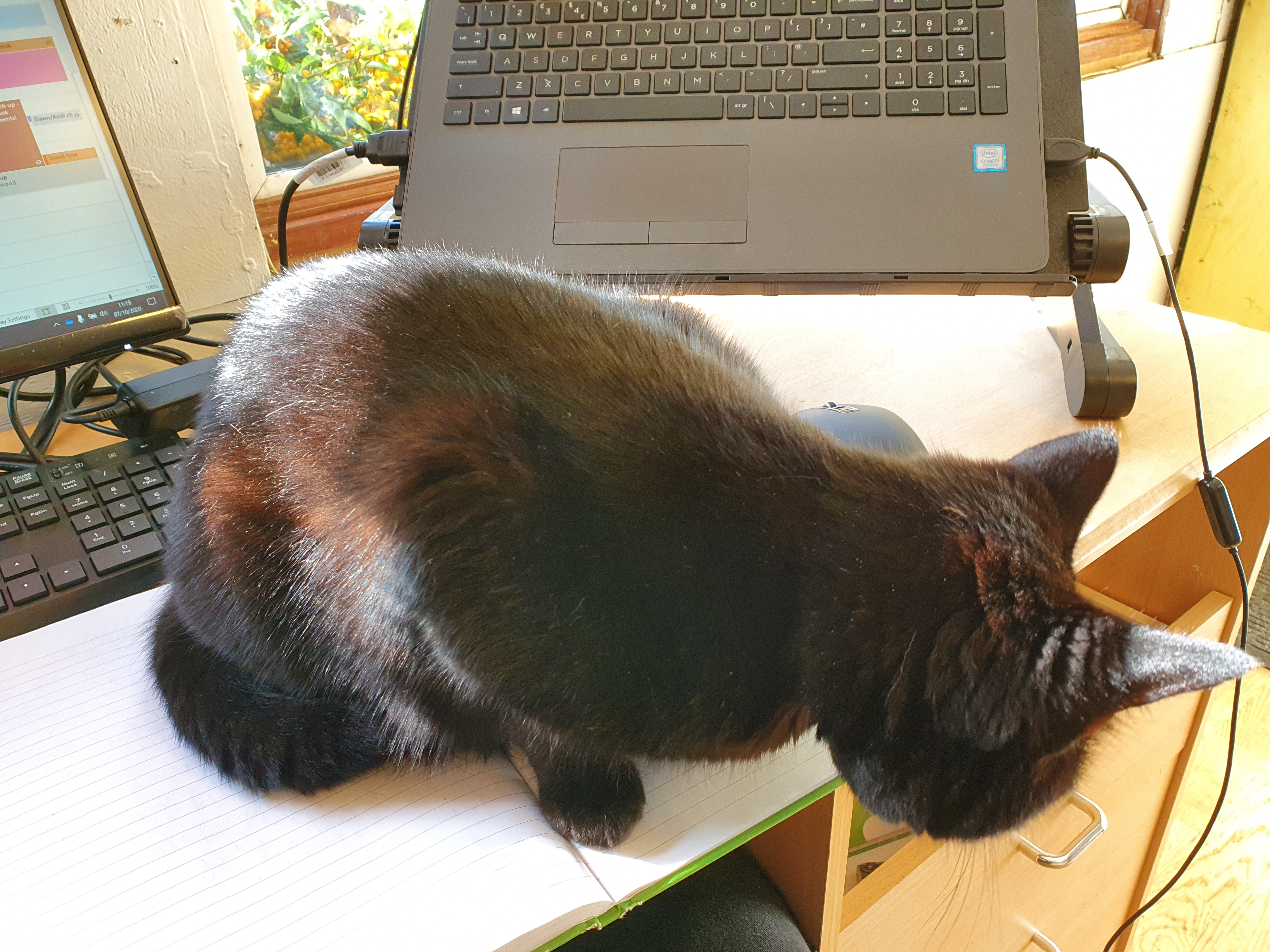 Black cat sat on notebook in front of laptop preventing work