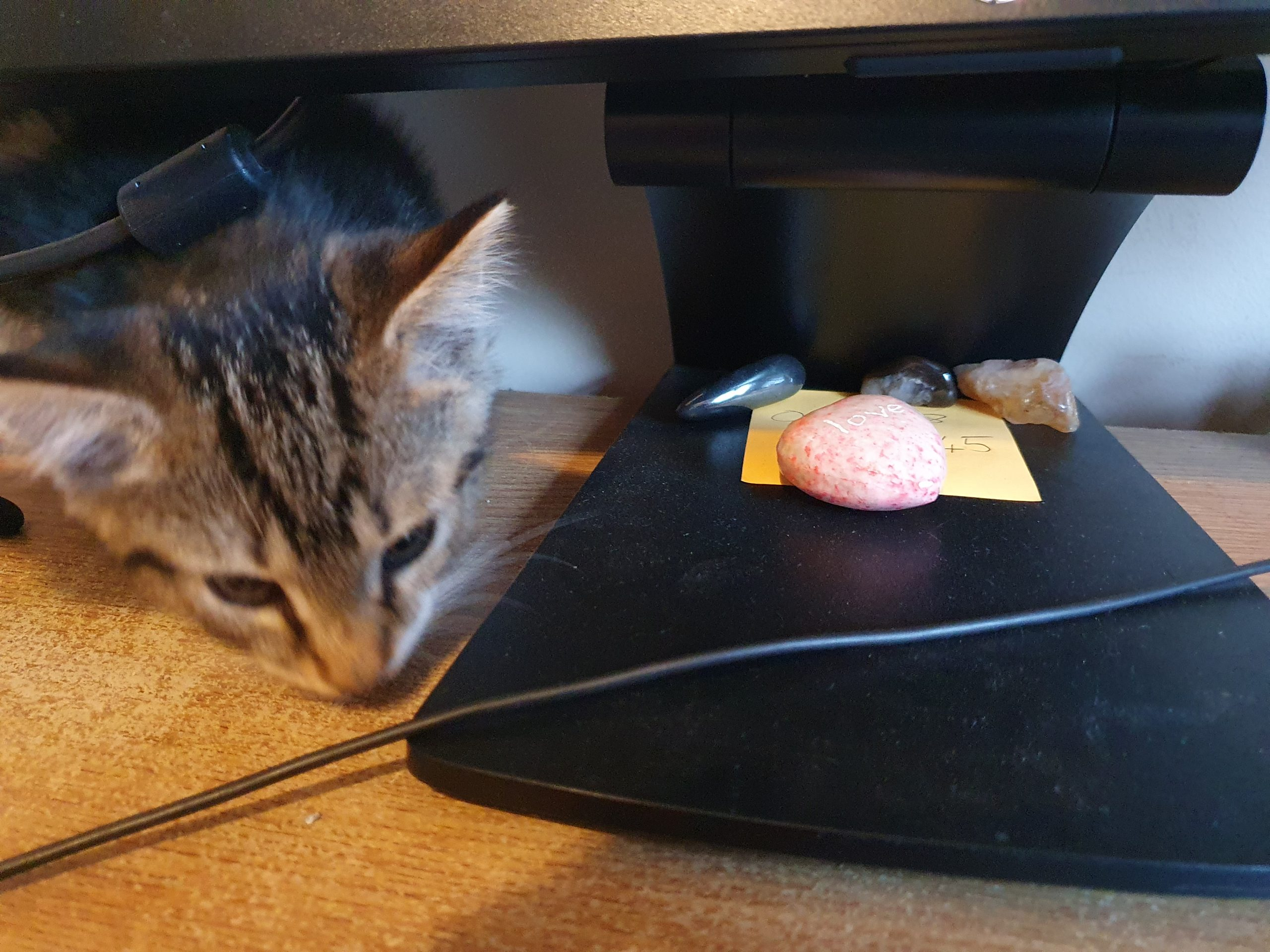 Tabby kitten facing camera, next to monitor stand with some decorative stones and the Chrysalis phone number on a post it on it.